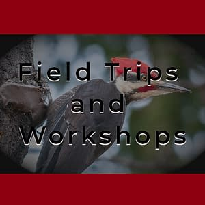 Field Trips + Workshops